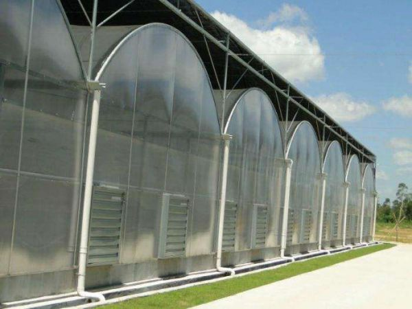 qing zhou shi zhongxing Greenhouse Engineering Co., Ltd