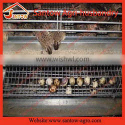 Top quality Cheapest poultry shed design house