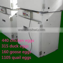 excellent quality and high hatching rate 1105 quail eggs Supplier's Choice