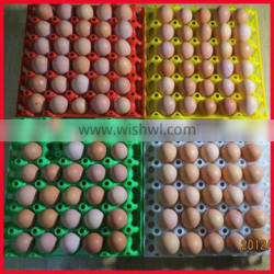 30 holes plastic egg tray for packing and transportation
