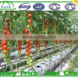 commercial greenhouses china