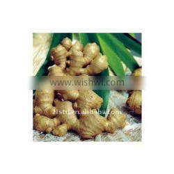Wholesale Air-dry Ginger 100-300g up