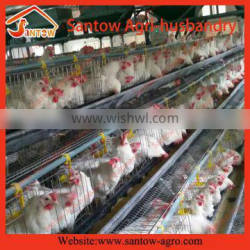 Poultry automatic bird layer cage wire mesh broiler cage system