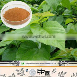 China supplier mulberry leaf extract 1-DNJ