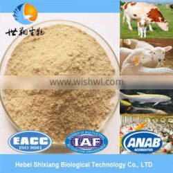 high protein yeast extract powder