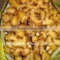fresh fat ginger from China
