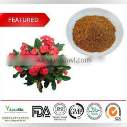 Natural flower extract of Crown of Thorns wholesale, High quality flower extract of Crown of Thorns in bulk