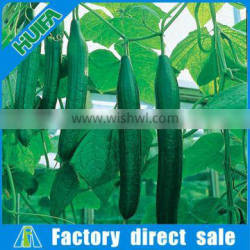 Lowest Price Greenhouse Growing Vegetable