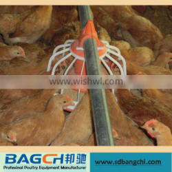 Automatic pan chicken feeding system for poultry