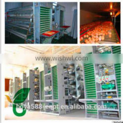 automatic chicken cage --collection egg system machine