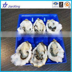 plastic oysters Plastic Blister Trays