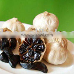 Aged black garlic extract