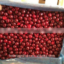 Frozen fresh style sour cherry high quality