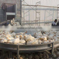 Automatic H frame chicken raising system