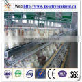 automatic a type chicken cage system