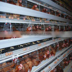 Professional manufacturer design A type layer chicken cages system for sale