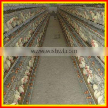 cheap chicken layer cage/chicken breeding cage