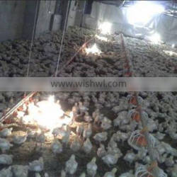 advanced design automatic farming equipment for broilers and chickens