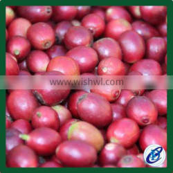 Arabica Green Coffee Beans,Best Price coffee beans