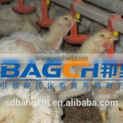 whole poultry automatic feeding line