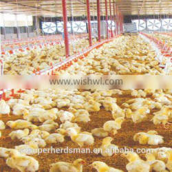 broiler chicken farming equipments for poultry farms with good price