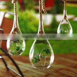 Micro landscape ecological Meaty plant Water drop glass vase with The Manila Rope