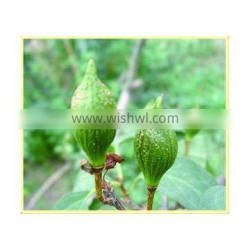 Weeping Forsythia Chinese Herb Medicines