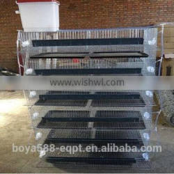 Automatic quail cages 720 layer quails for large scale quail farm