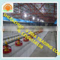 Whole Poultry Automatic feeding system feed line for Broilers and Breeders