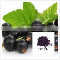 Anti-oxidant 100% natural 4:1 maqui berry extract