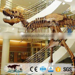 OA6169 Museum Use Dig Dinosaur Discovery Fossil