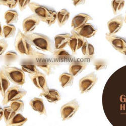 First Grade Moringa Conventional Seeds For Your Door Step