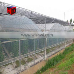 High Quality Multi Span Plastic Film Agriculture Hydroponic Greenhouse for Tomato Strawberry