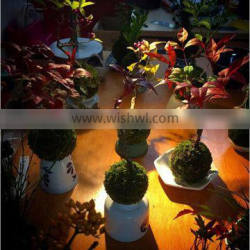 Set your plant free levitating bonsai trees floating in the air