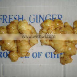 CHINESE FRESH GINGER for turkey good quality
