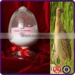 Excellence Growing Peptide(AB01) cheap chicken feed for sale