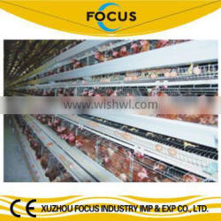 Focus industry design layer chicken cages layer and broiler