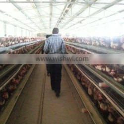 Saudi Arabia best selling chicken cage chicken egg layer cage battery cage