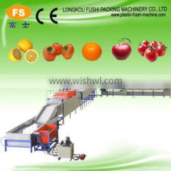 Citrus/Mandrin/Orange Washing Waxing Machine
