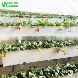 Vertical Strawberry Growing Hydroponics Culture