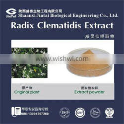 high quality 10:1 20:1 clematis chinensis osbeck extract