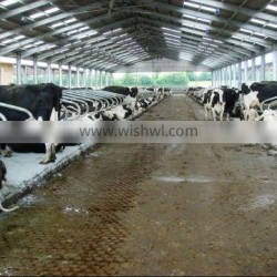 Steel Dairy Cow Shed
