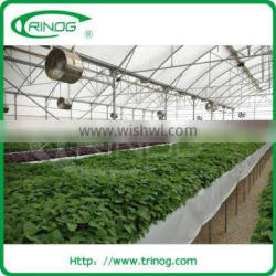 commercial hydroponic greenhouse for herbs