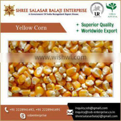 Highly Engaged In Supplying, Trading And Wholesaling Yellow Maize