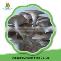Supply High Quality Oyster Mushrooms 1kg