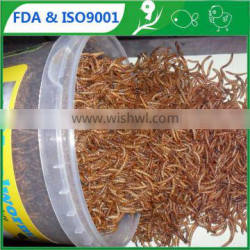 A great source of protein natural food dried mealworm bird food
