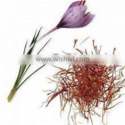 Saffron Extract supplier