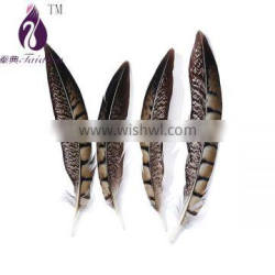 pheasant feathers for clothing/wedding decoration,stage bulk feathers