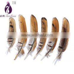 natural color Revees Pheasant chicken feathers