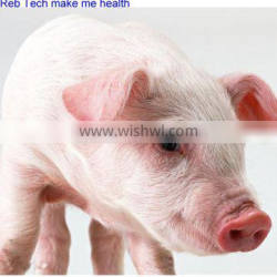 5% discount GMP Tiamulin hydrogen fumarate for pigs